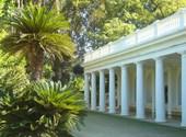 Palmiers de l'espèce trachycarpus - jardin d'essai, alger Fonds d'écran