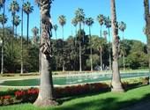 Palmiers mexicains washingtonia robusta - jardin d'essai, alger Fonds d'écran