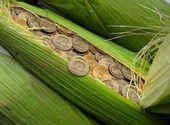 Argent dans le maïs Dessins & Arts divers