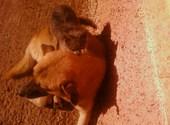 Esseghier animaux  Photos