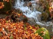 Coule l'automne Photos