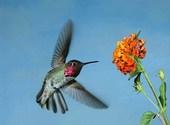 Oiseau Photos