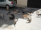 Chats à tanger Photos