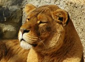 Lionne Photos