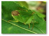 Insecte Photos