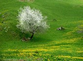 Début de printemps Photos