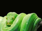 Python vert Photos
