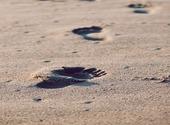 Traces de pied dans le sable Photos