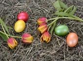 Fleurs de Pâques Photos