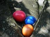 Chasse aux œufs  Photos